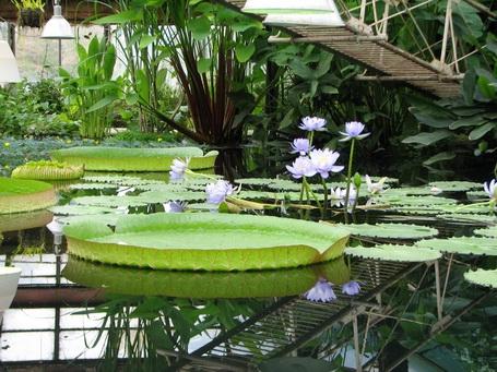 Ботанический сад находится в самом